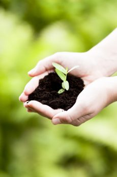7 Ways Gardening Helps the Environment1