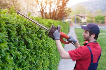 man using the best electric hedge trimmer