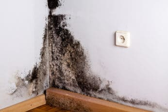black mould in the corner of a room
