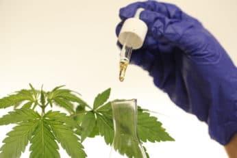 Cannabidiol oil in a dropper