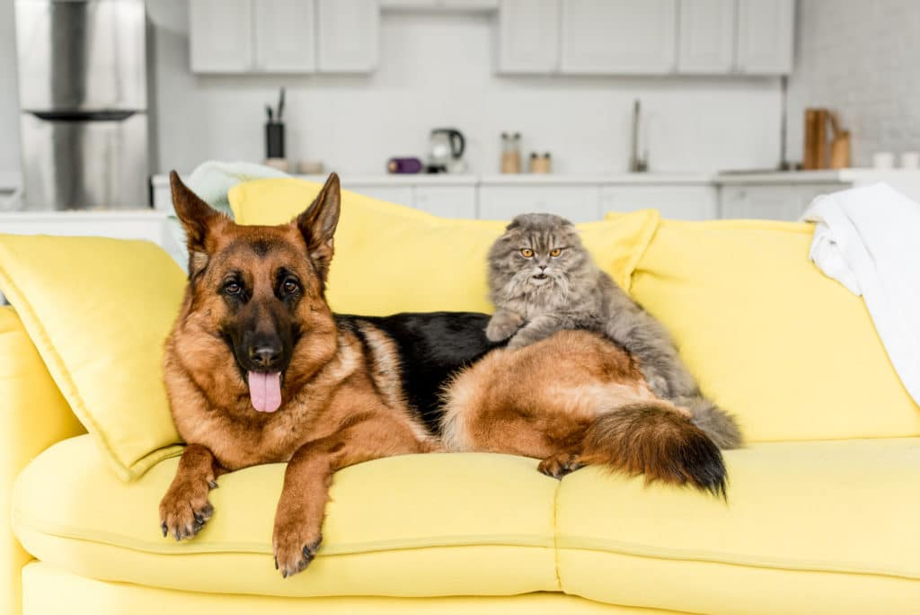 pets on the sofa