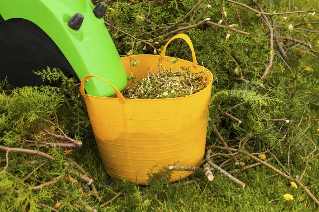 cut twigs in a bucket