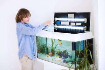 a boy transferring some fishes to an aquarium