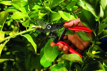 a hand holding a secateur to cut a branch