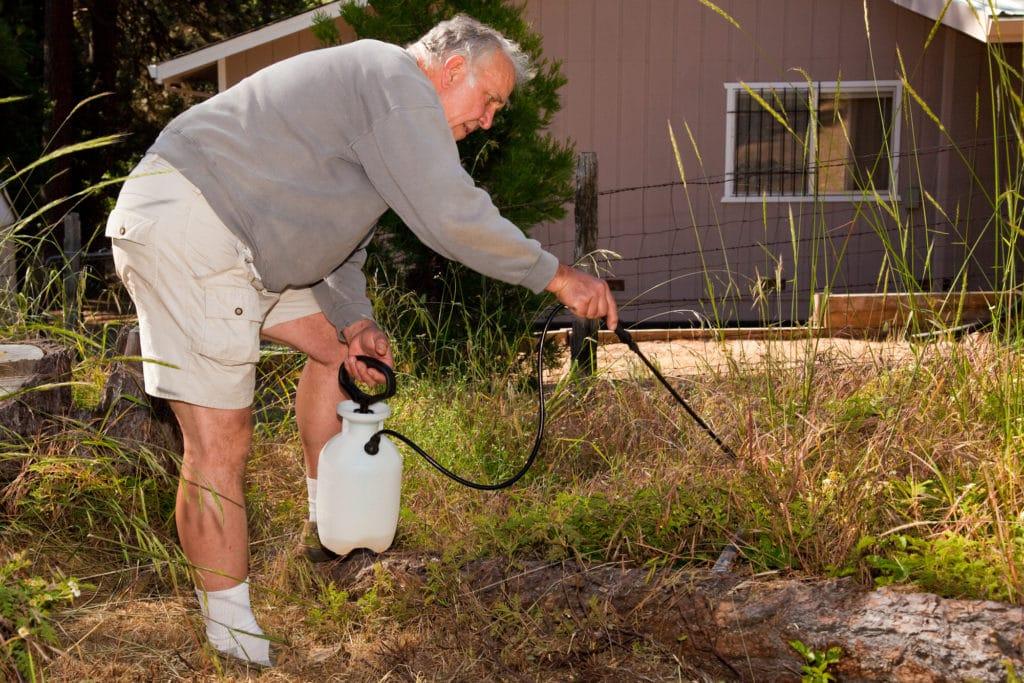 a senior spraying herbicide on weeds