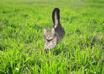 cat running in the garden
