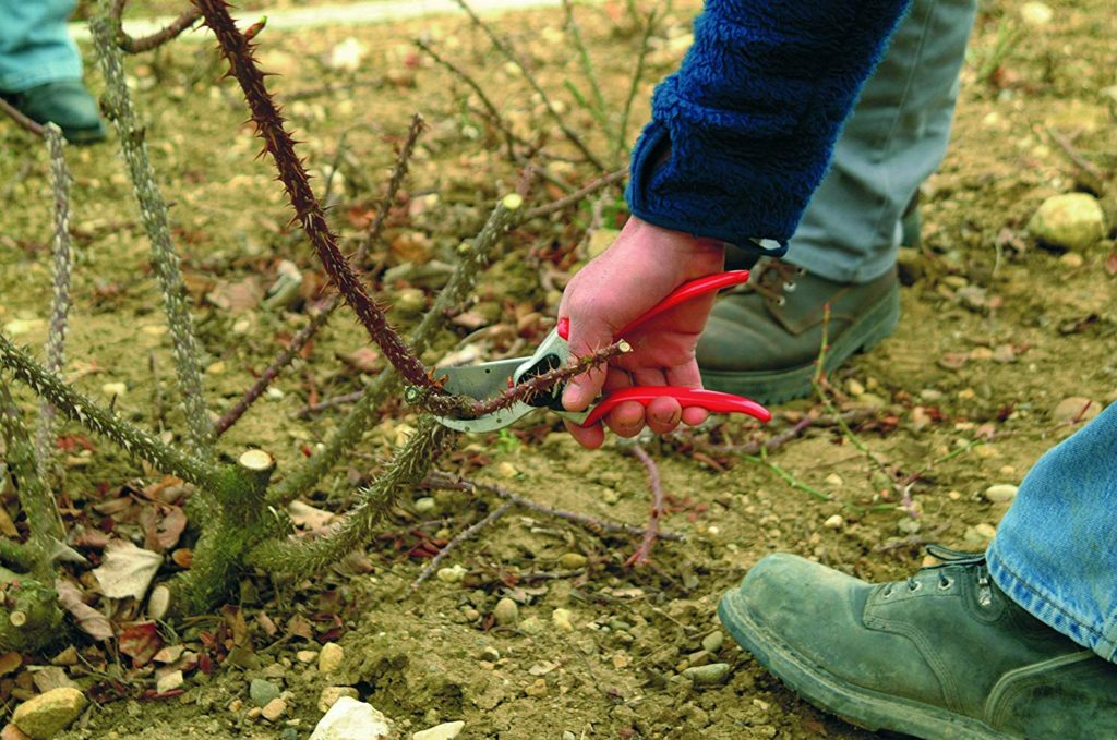cutting a thorny stem