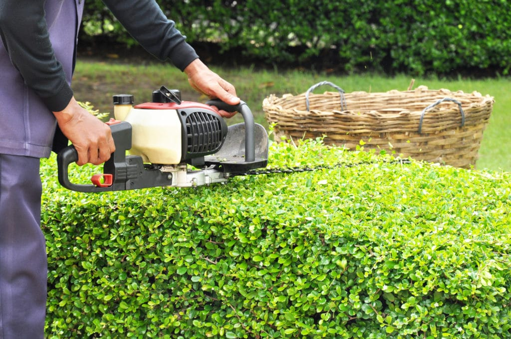 a gardener trimming hedges