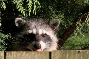 best wildlife camera uk
