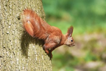 high quality photo of squirrel