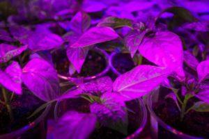 best led grow lights uk