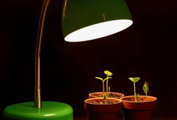sprouting potted plants under a lamp