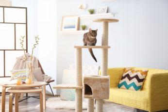 feline activity house