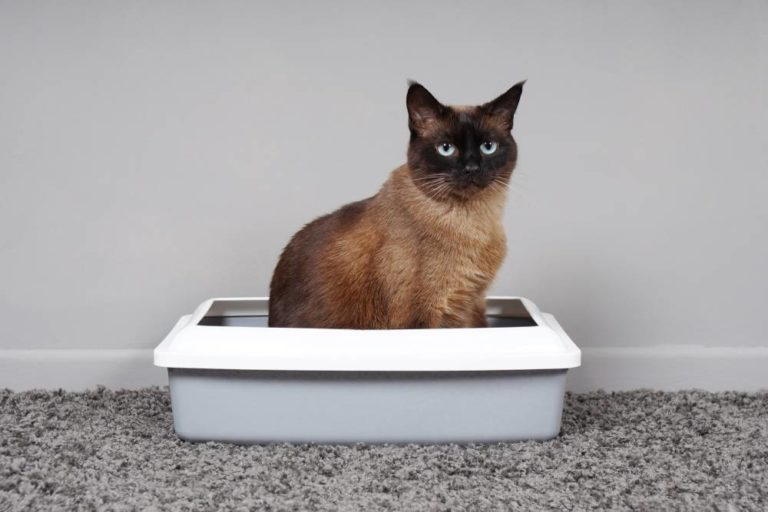 best cat litter tray uk