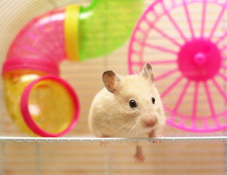 best hamster cage uk