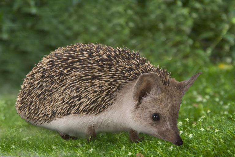 best hedgehog house