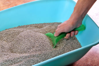 cleaning an indoor sandbox with shovel