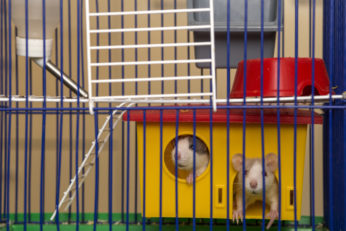 two rodents in multi-level wire