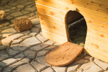 wooden shelter for small animals