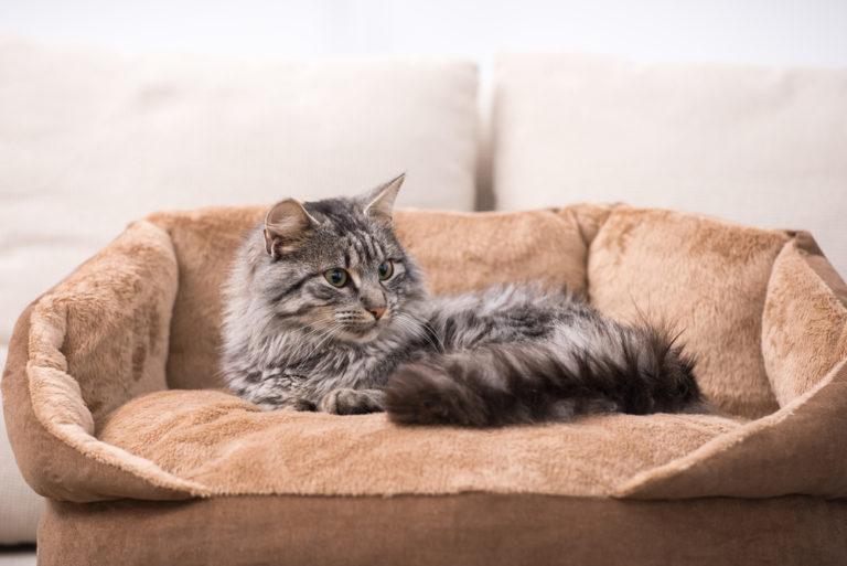 best cat bed