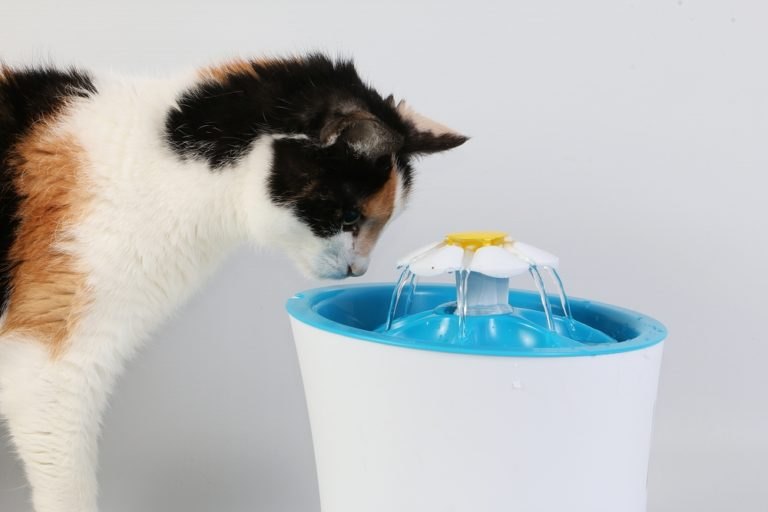 best cat water fountain uk