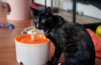 black feline near dispenser with flower spout