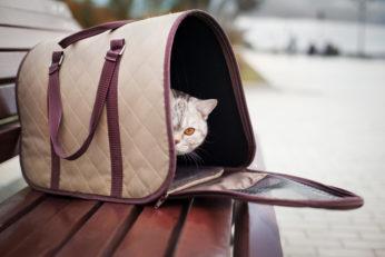 shy feline inside pet carry bag