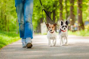 best dog lead
