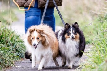 woman walking two small dogs